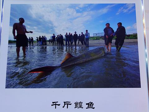 抚远黑龙江鱼展馆旅游景点图片