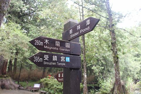 阿里山森林游乐区旅游景点攻略图