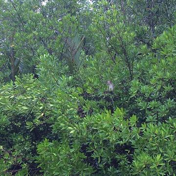 红树林旅游景点攻略图
