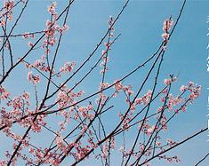 【春之印象】凤凰沟,满足你一世对花海的向往