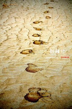 和田胡杨林旅游景点攻略图
