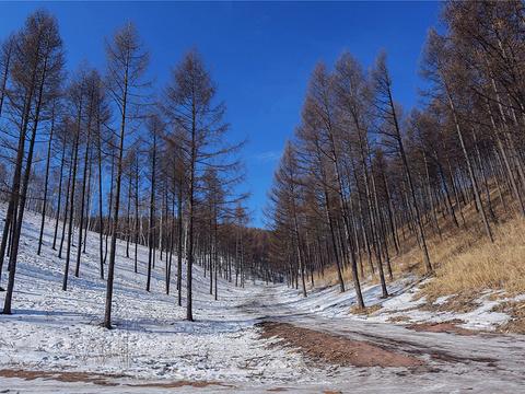 塞罕坝国家森林公园旅游景点图片