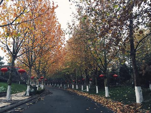 春晖园温泉旅游景点图片
