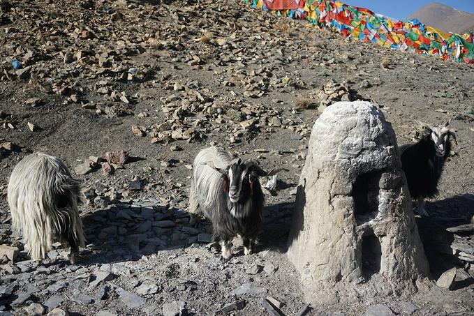 (十一)2017-03-28卡若拉冰川+羊卓雍措+奇圣牛肉馆图片