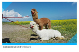 青海湖南山观景台