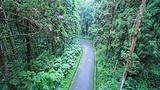 溪头森林公园