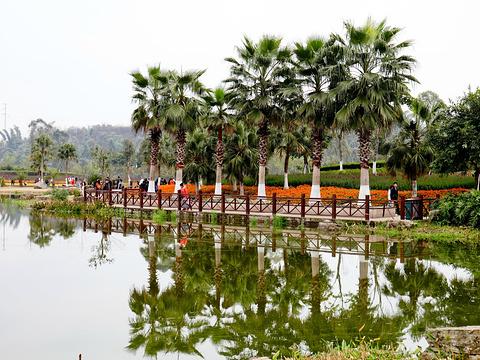 自贡花海旅游景点图片