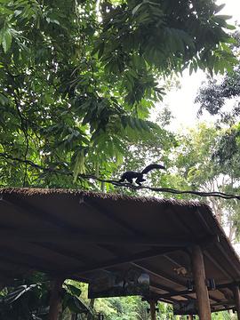 新加坡动物园旅游景点攻略图