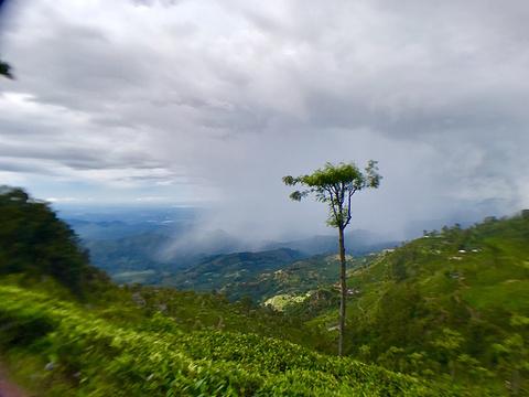 立顿茶厂旅游景点图片