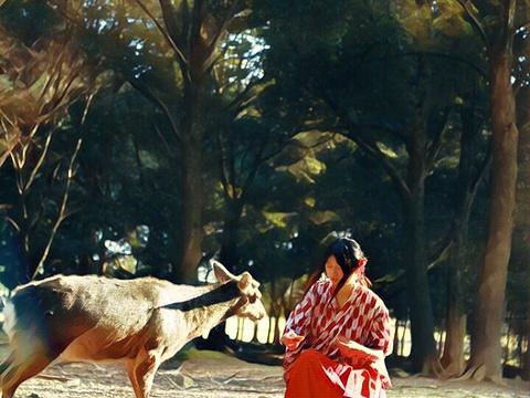 春日山原始林旅游景点图片