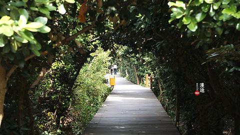 红树林自然保护区旅游景点攻略图