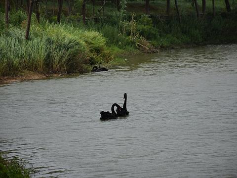 艾溪湖湿地公园旅游景点图片