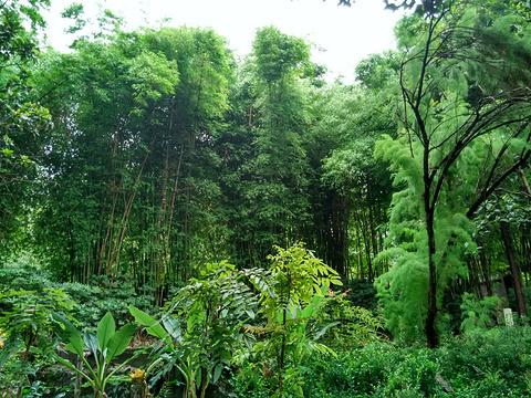 金殿公园旅游景点图片