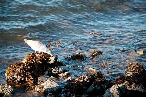 英吉利湾旅游景点攻略图