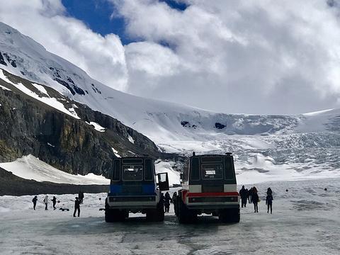 阿萨巴斯卡冰川旅游景点图片