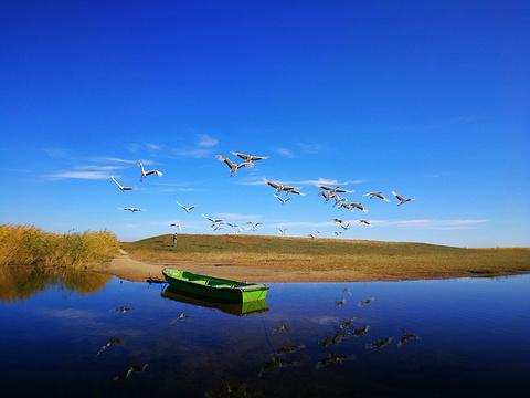 扎龙自然保护区旅游景点图片