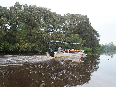 亚庇市湿地中心旅游景点图片