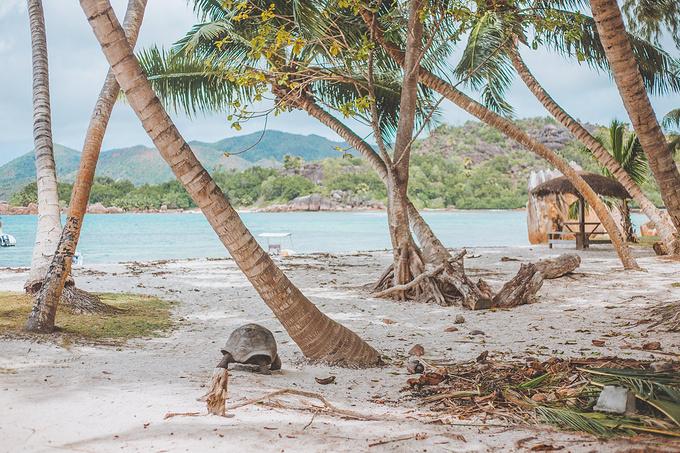 象龟岛图片