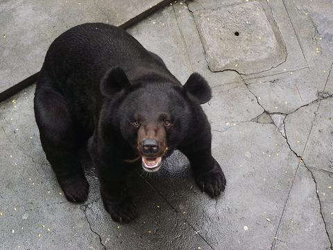 广州动物园旅游景点图片