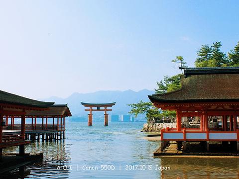 严岛神社旅游景点图片