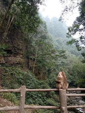 自然生态猴区旅游景点攻略图