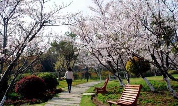 上海闵行体育公园图片