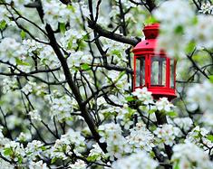 #春天去哪儿玩# 来武汉赏花吧!2018年武汉周边最全的赏花地指南都在这儿~~
