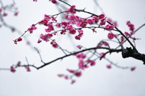 梅川公园图片