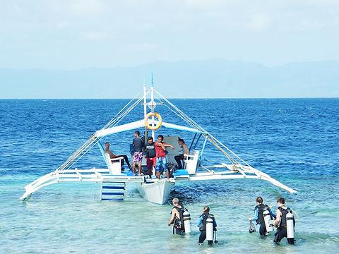 墨宝沙丁鱼风暴浮潜旅游景点图片