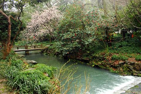 龙井村的图片