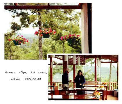 努瓦勒埃利耶茶园旅游景点攻略图