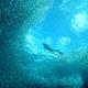 墨宝沙丁鱼风暴浮潜
