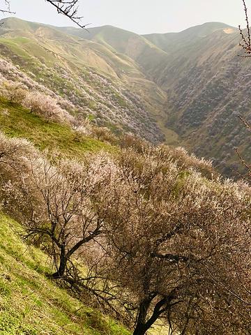 """""""...最佳赏花时间最多相差一个月,很难捕捉,加之花朵极其娇弱,风、雨对花的影响很大,真可谓可遇不可求_杏花沟""""的评论图片"""