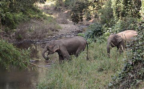 西双版纳热带雨林自然保护区旅游景点攻略图