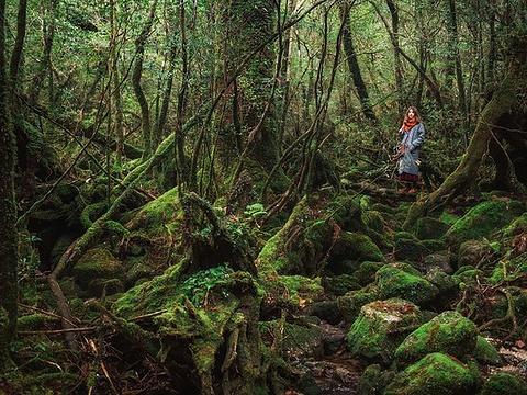 白谷云水峡旅游景点图片