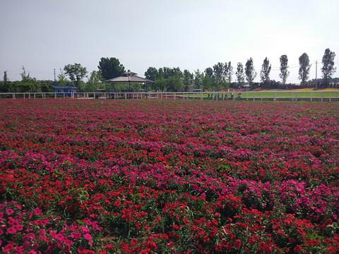 紫云水岸香草园旅游景点图片