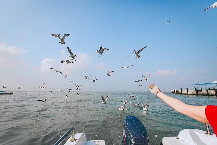 """""""位于山东省威海市荣成市的海驴岛也非常值得游玩儿。图片来源于去哪儿聪明旅行家@扫雪_海驴岛""""的评论图片"""
