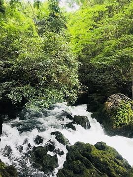 茂兰喀斯特森林旅游景点攻略图