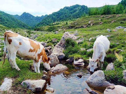 驼梁风景区旅游景点图片
