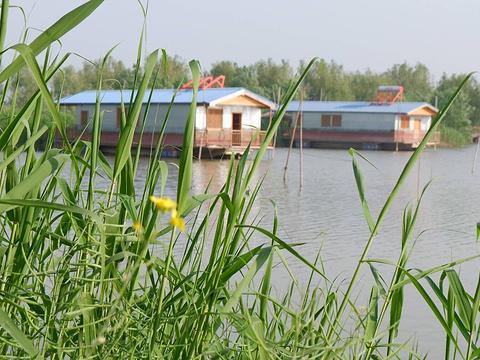 高邮湖芦苇荡湿地公园旅游景点图片