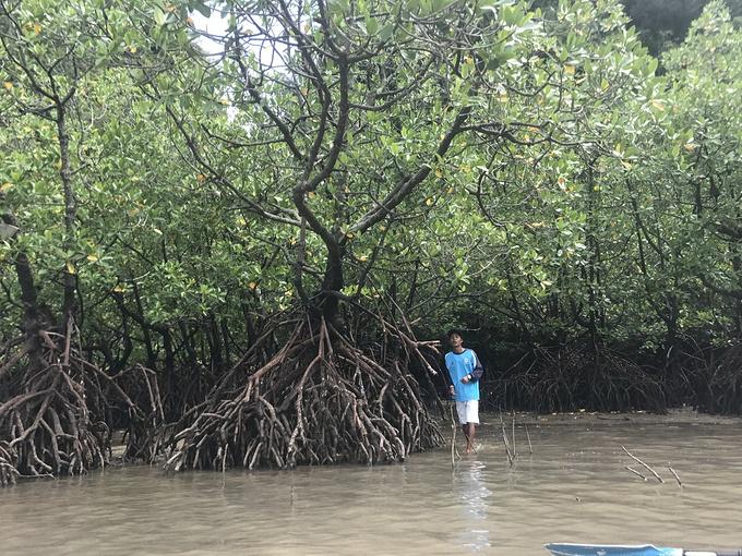 甲米(红树林皮划艇)图片