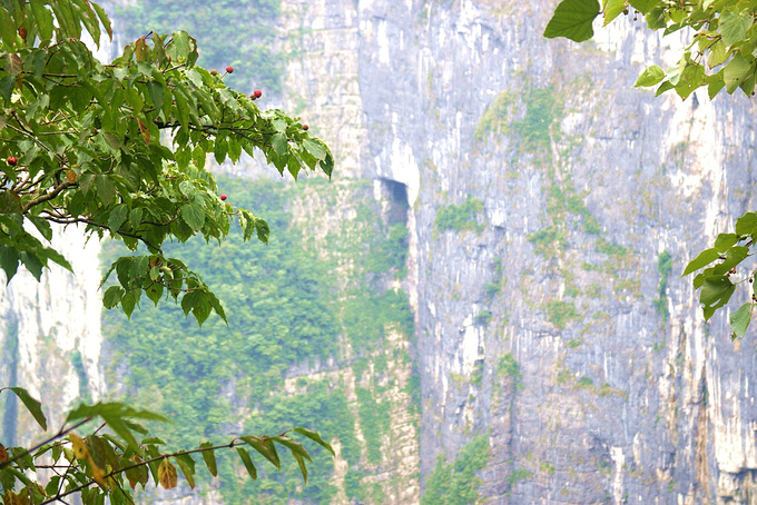 天门山国家森林公园(5小时)图片