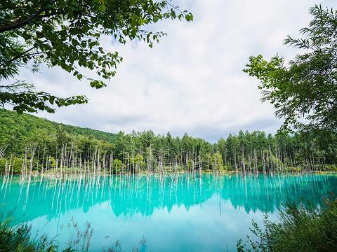 青池旅游景点图片
