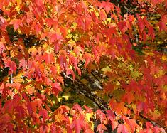 北京周边5个小众的赏秋地,趁着天气回暖,快去赏秋吧!