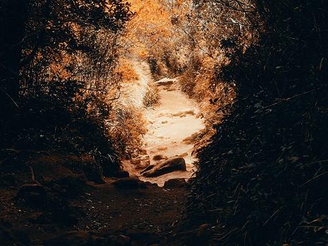 霍顿平原国家公园旅游景点图片