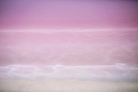 粉红湖的图片
