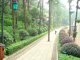天际岭国家森林公园
