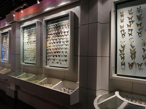 峨眉山博物馆旅游景点图片