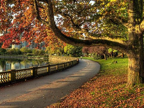 斯坦利公园旅游景点图片