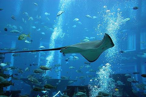 迪拜失落的空间水族馆